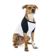 American Apparel®¾ sleeve dog raglan t-shirt (BB953)